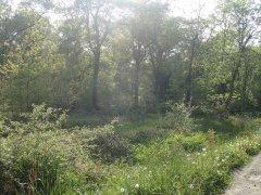 Forêt communale