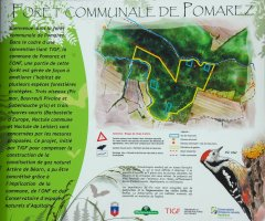 Forêt Communale de Pomarez